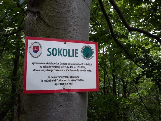 sokolie_23.jpg